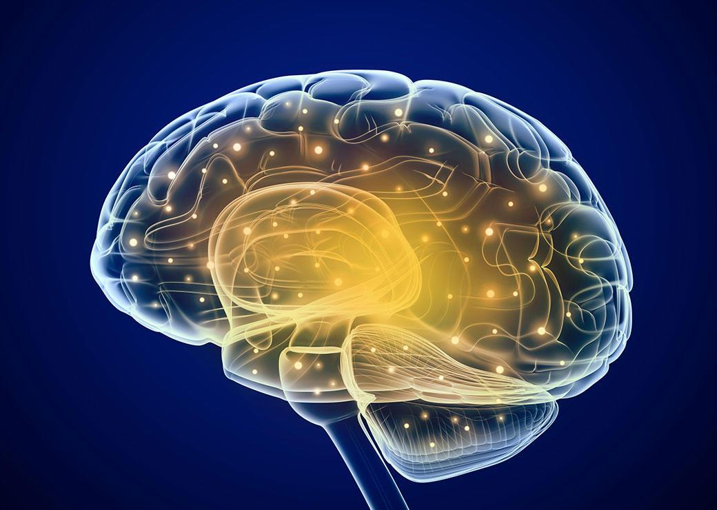cerveau-connections-Projet-Shiva